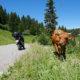 Motorcycle Holidays in Chamonix