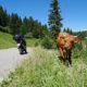 Motorcycle Tours in The Alps