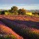 séjour, balade, voyage moto dans le sud de la france, provence et vercors